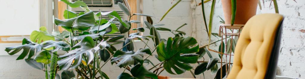 Plante et chaise moderne jaune dans un cabinet de psychologue