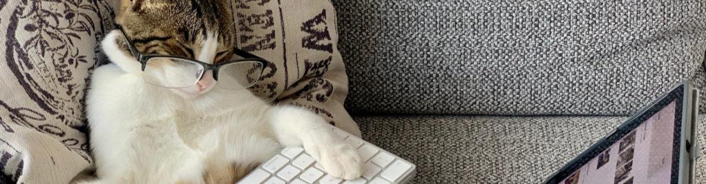 Un chat à lunette endormi sur un clavier d'ordinateur devant une tablette