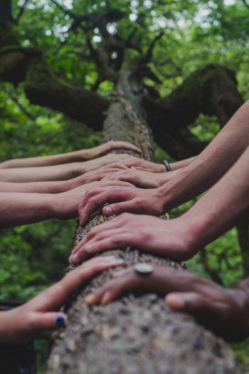 Groupe de personne posant leurs mains sur un arbre